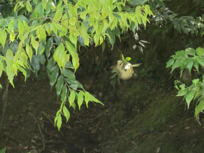 世界遺産、大本山天龍寺で....